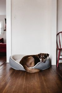 Budget Dog Beds - Post Thumbnail
